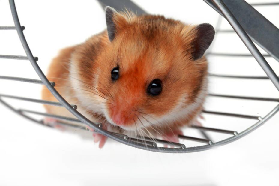 hamsterrad für hartz iv betroffene